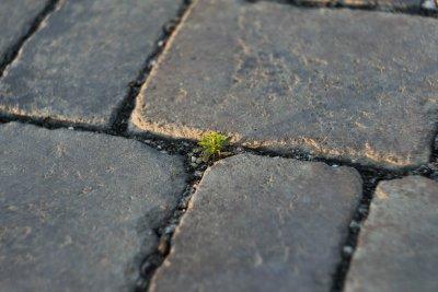 Lasst Nachhaltigkeit wachsen!