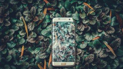Smartphone im Busch gleicht Learning Center