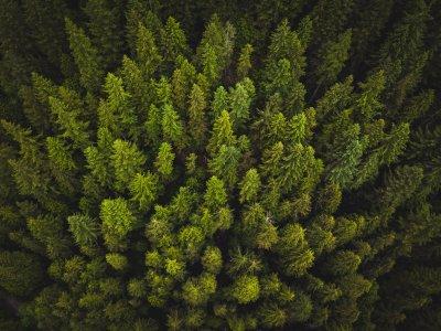 Nadelwald aus der Luft