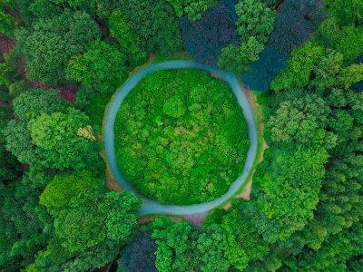 Ein Wald von oben, durch den ein kreisförmiger Weg führt